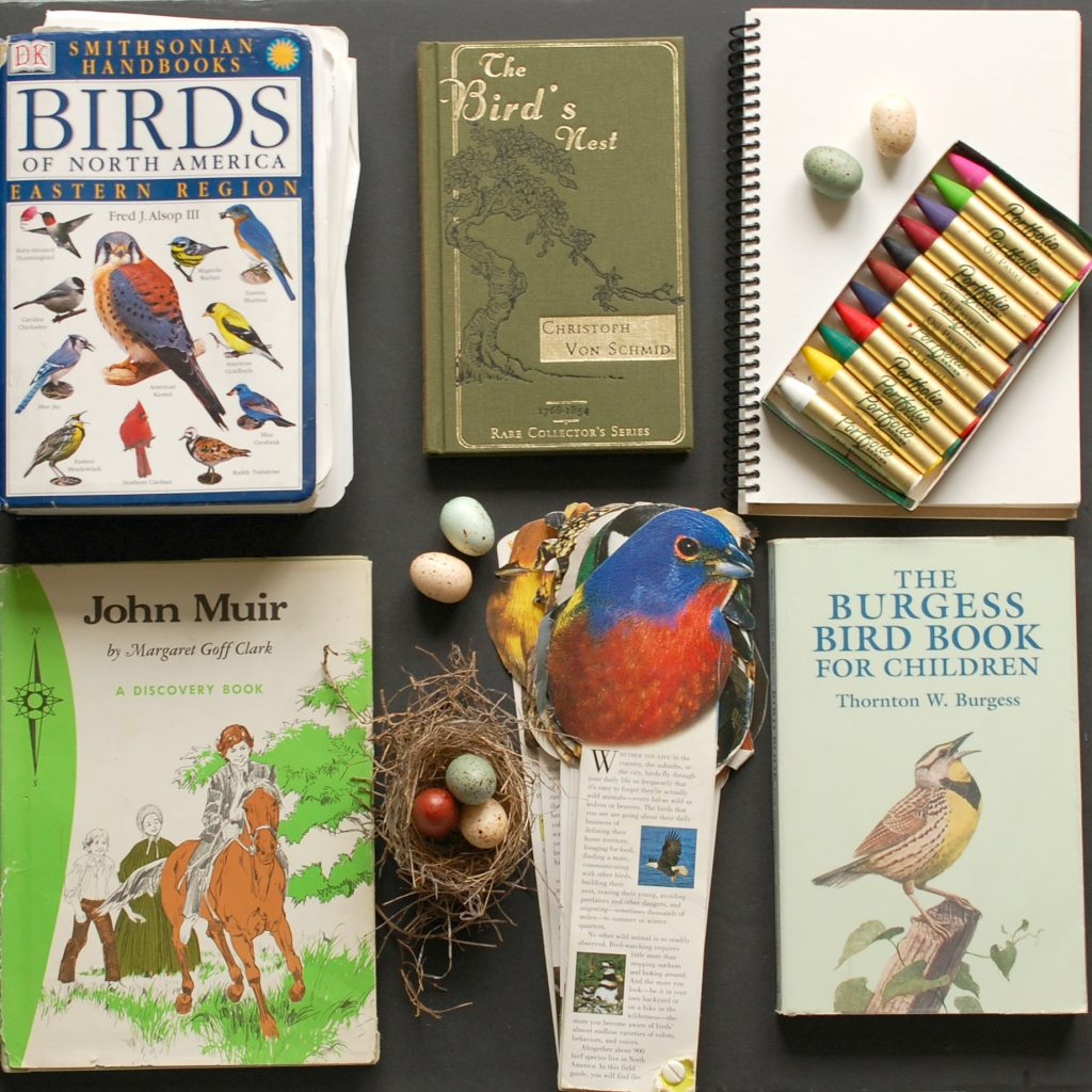 Bird Study ideas for a Charlotte Mason homeschool | www.thecharlottemasonway.com